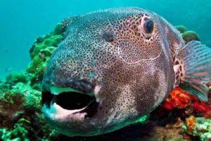 Diving & Snorkeling Krabi